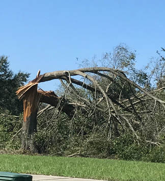 Port Orange FL Tree Service
